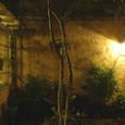 夜のパティオガーデン
