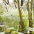 雪柳と寄せ植え