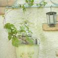 壁掛けブリキと斑入りノブドウ