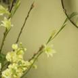 アンティークミラーとレモン色の花