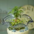 金魚鉢とミニ観葉