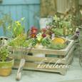 ガーデン雑貨と・・・