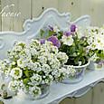 サボンラックと花